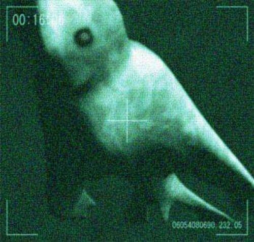 Японские исследователи обнаружили в Антарктике гигантского гуманоида