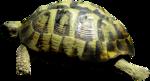priss_laprimavera_turtle.png