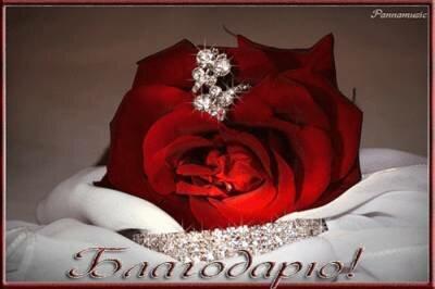 Благодарю. Красная роза и украшения открытка поздравление картинка
