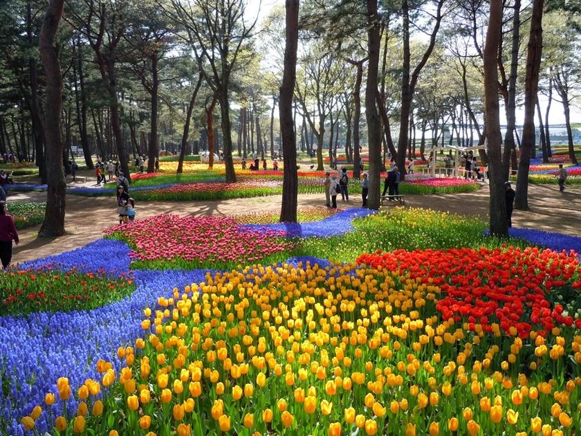 Живописный японский парк Хитати Кайхин 0 1422e5 98316666 orig