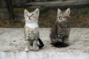 Тётя, тётя кошка, выгляни в окошко...