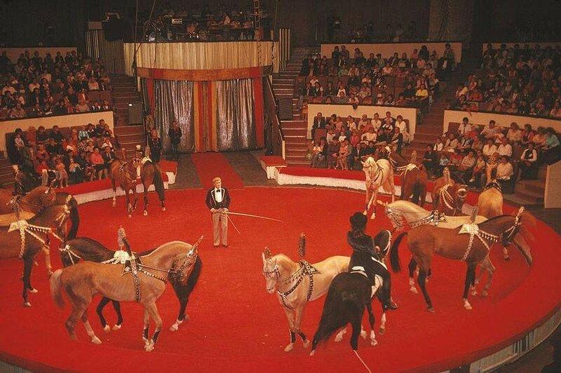 В донецком цирке. 1988 год.