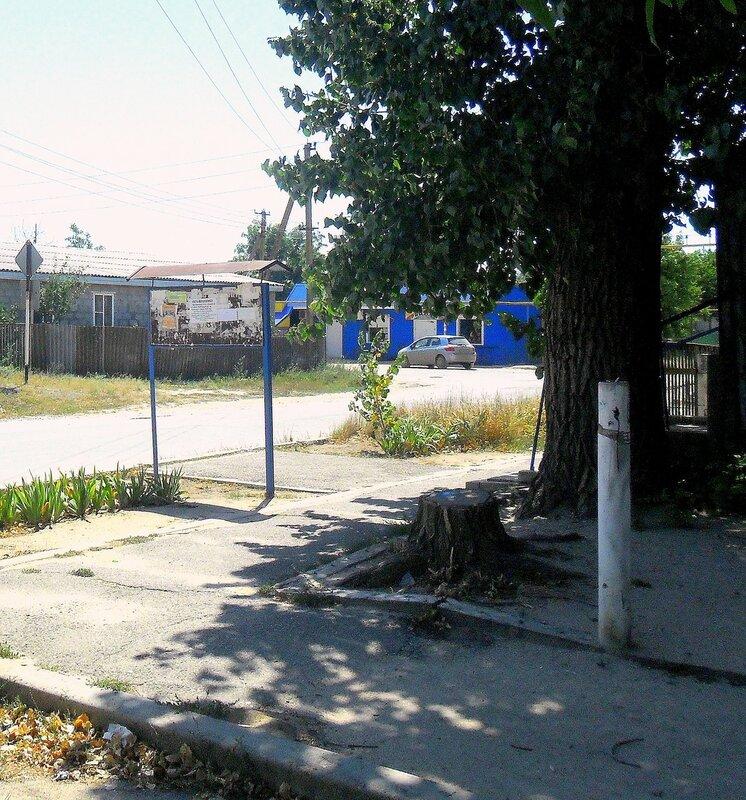 В тени, на улице ... SAM_9037.JPG
