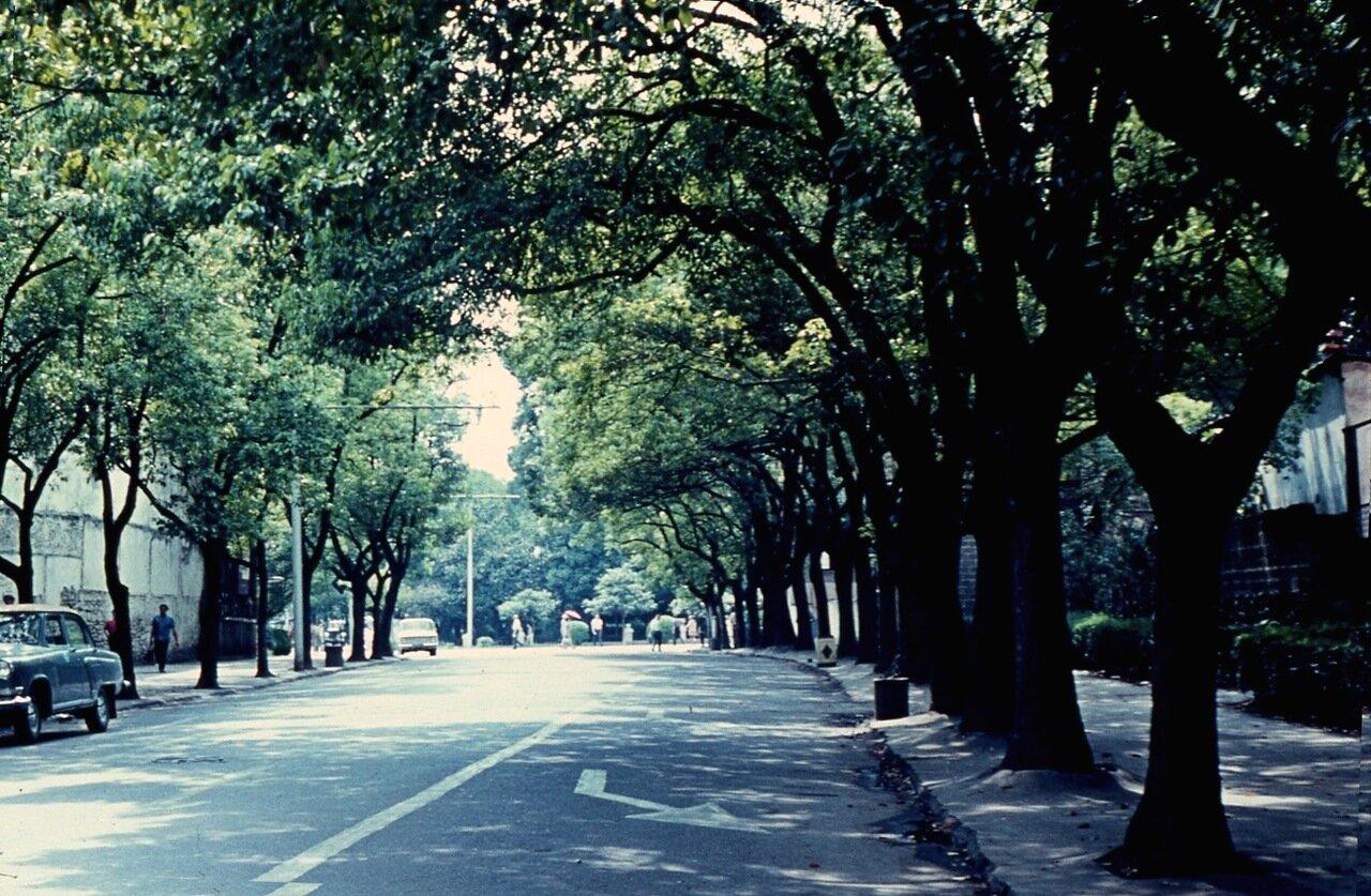 35. Зелёный проспект