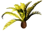 R11 - Palms - 2013 - 017.png