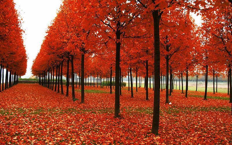Красивые осенние пейзажи