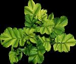 листья - группа.png