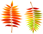 Осень126