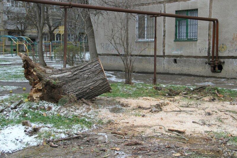 Улица Горбульского: дерево упало на 99-ю