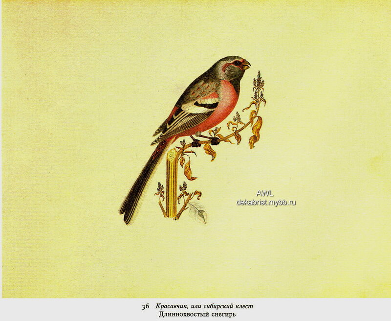 http://img-fotki.yandex.ru/get/9503/19735401.e4/0_82448_c781fbd0_XL.jpg