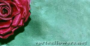 Мастер-класс. Роза  «Пышка» от Vortex  0_fd787_7af33296_M