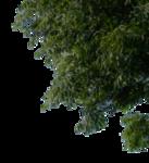 tree_corner_1_png_by_gd08-d2ys9n4.png