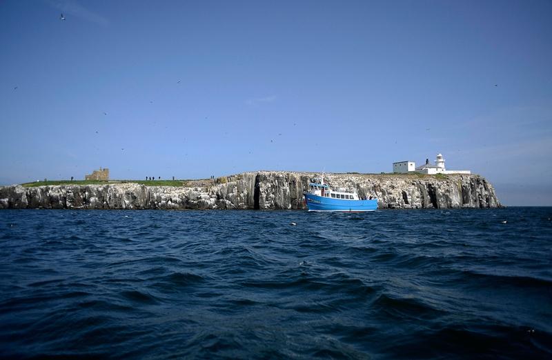 Тупики, тюлени с островов Фарн