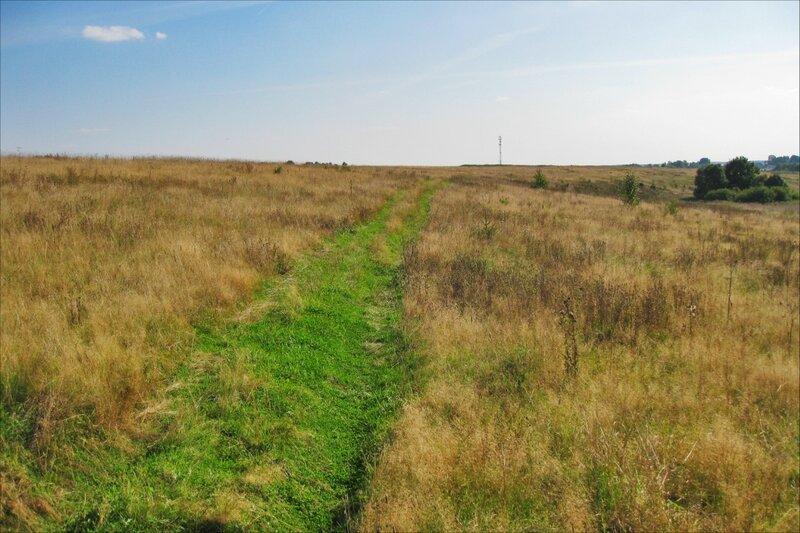 Дорога через Протасовское поле