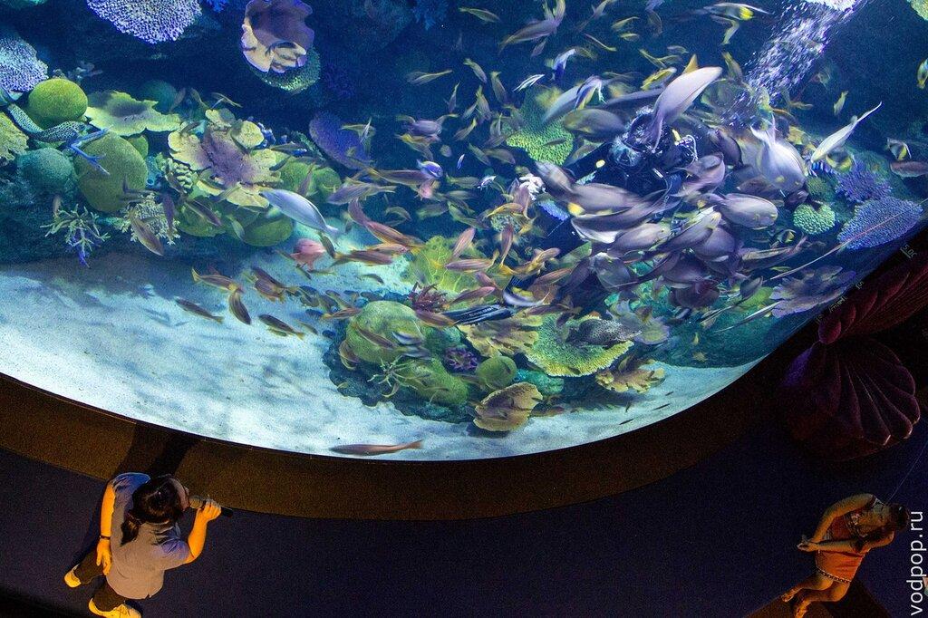 рыбки в океанариуме