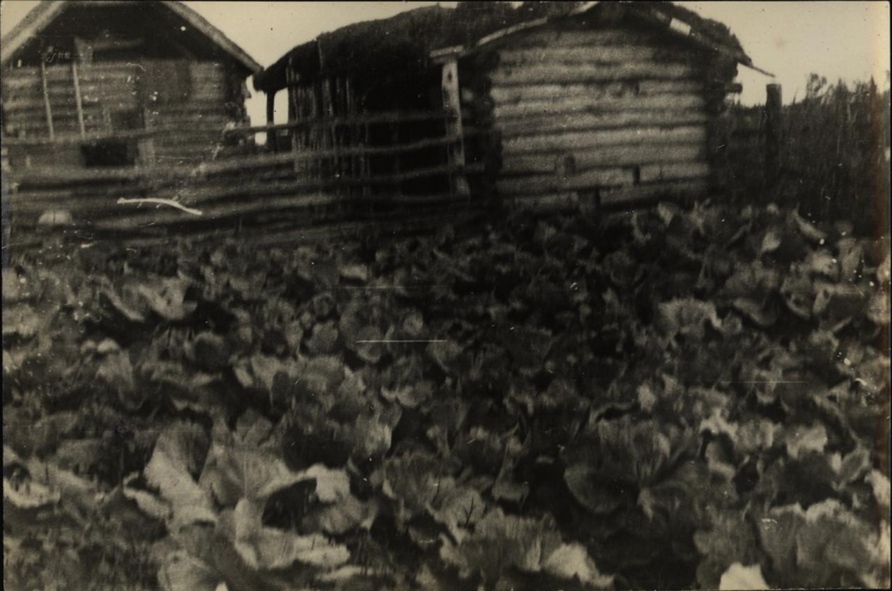 Русское селение Урми, около Ина. Хаты. Огород