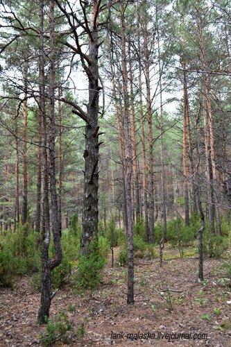 сайте фотографии в заволжских лесах параметром