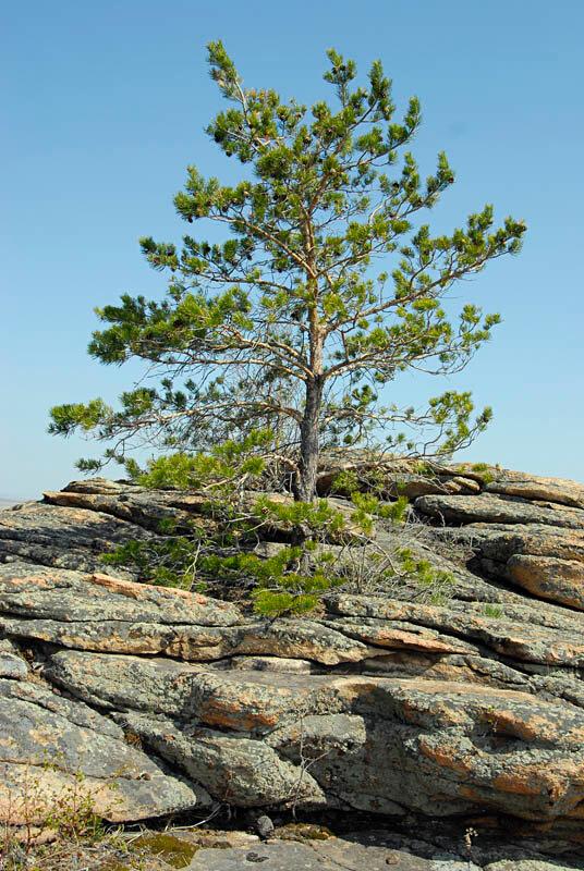 Деревья растут прямо из скал (01.11.2013)