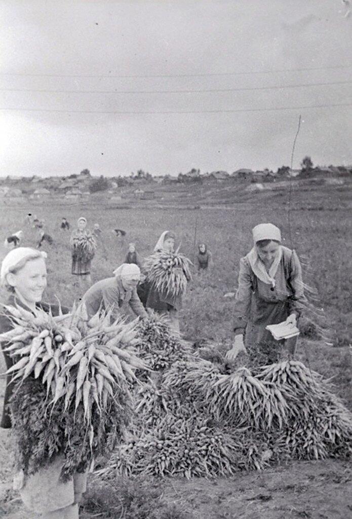 Учащиеся Ивановской средней школы № 38 за уборкой урожая моркови в поле совхоза.  1944 г. Ивановская область.
