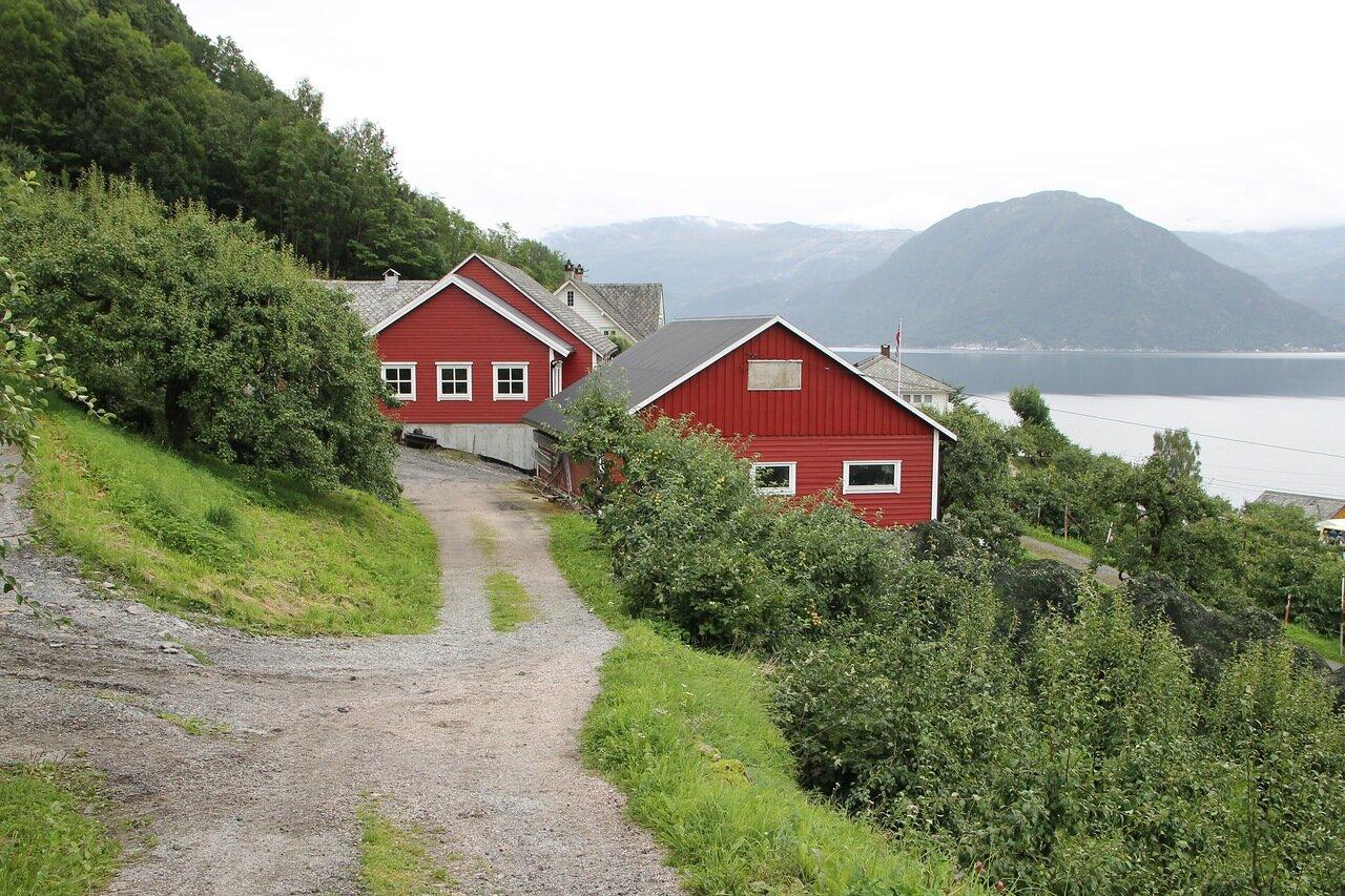 Хардангерфьорд, Фруктовая ферма Стейнсто. Hardangerfjord,  fruit farm at Steinsto