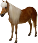 horse_2014 (1).png