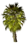 Palms  (37).png