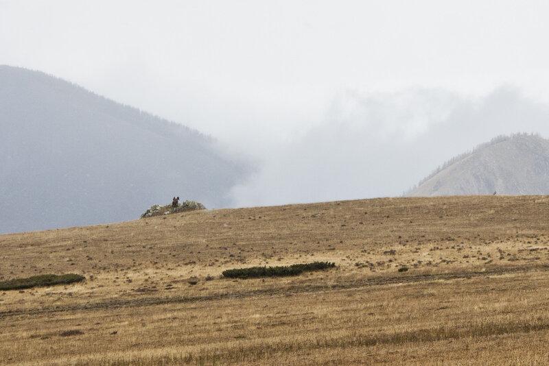 пастух ловит связь в туманах