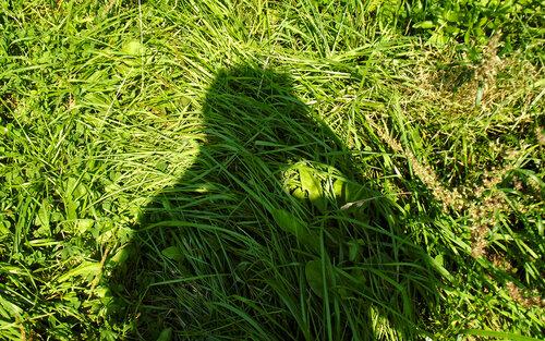 Немного тени в зеленой траве