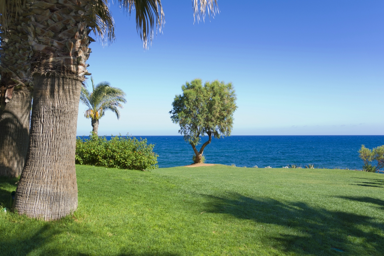 Дерево. У самого синего моря.