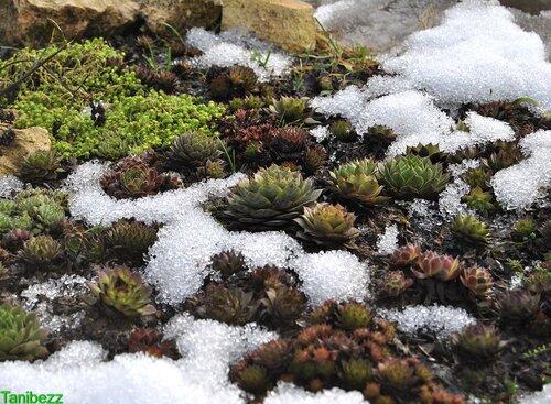 Альпийская Горка весной