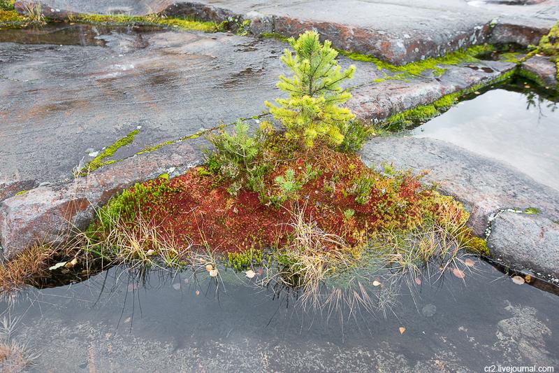 Карельский мох и болото