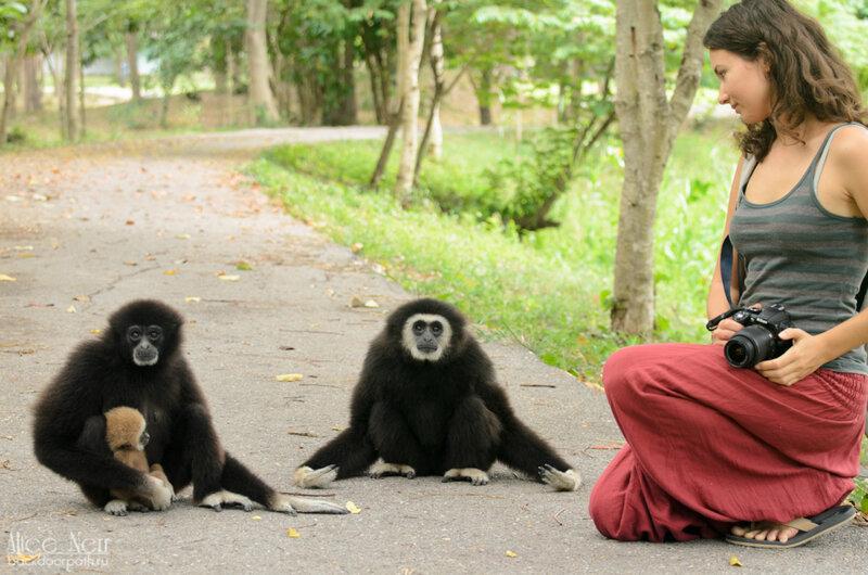 Наташа и гиббоны в Cha-Am Forest Park