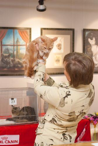 """Международная выставка кошек AFC """"Удивительные лесные кошки"""", 1 марта 2014 г. Сургут 0_b2630_afe51375_L"""