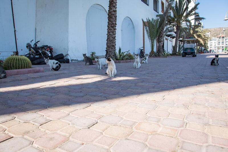 Марроканские котики