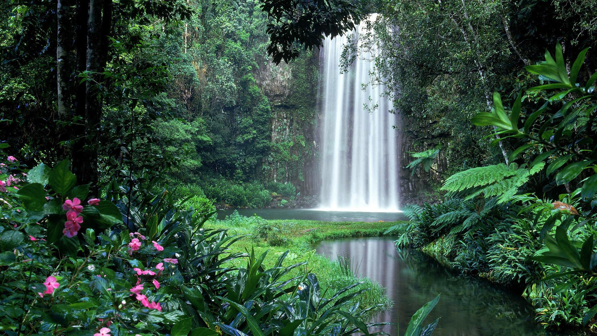 водопад среди деревьев без смс