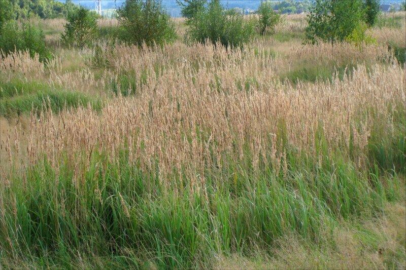 Полевые травы
