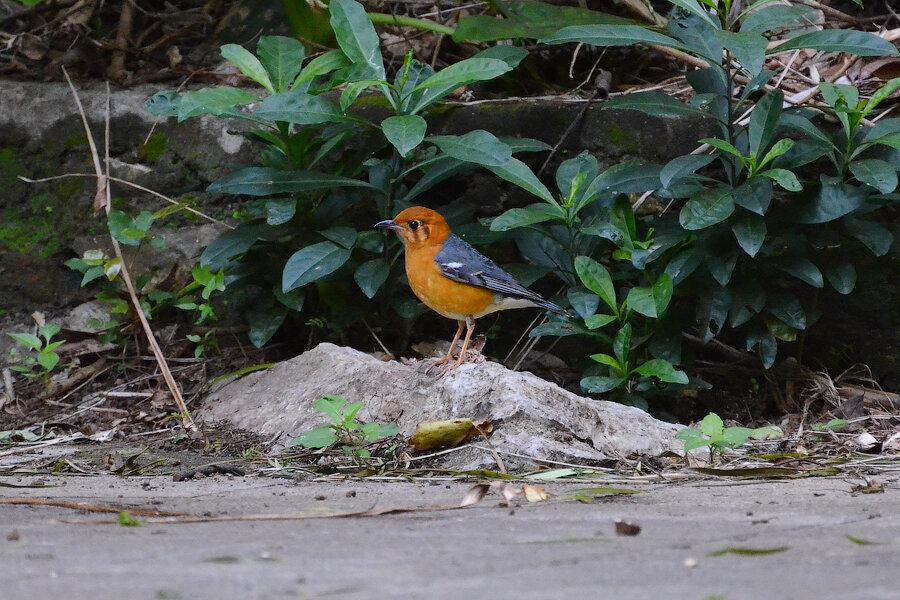Птицы в фотографиях из путешествий