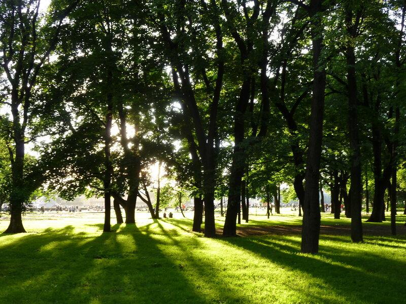 Солнце в Александровском саду