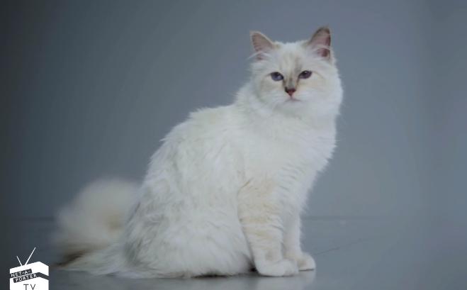 Карл Лагерфельд и его кошка