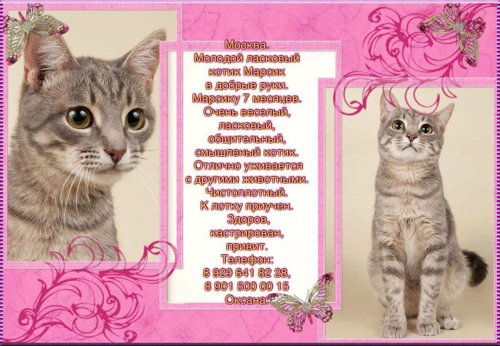 Москва. Молодой ласковый котик Марсик в добрые руки.