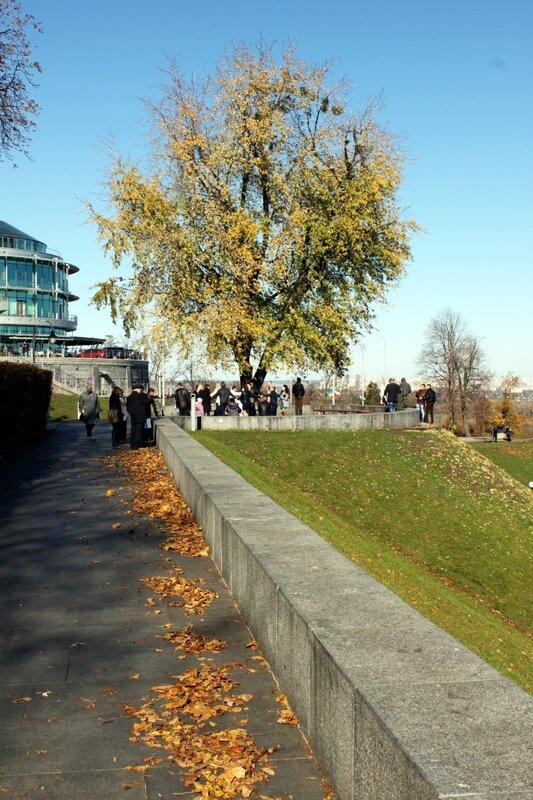 Опавшая листва на аллее парка Славы