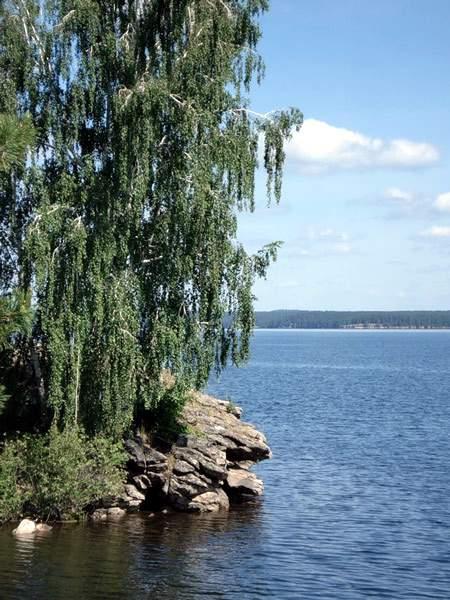 Картинки зауральской природы березы озеро