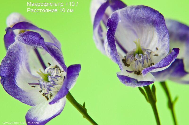 Фото 8. Примеры макросъемки с макрофильтрами. Этот кадр снят на close up +10.
