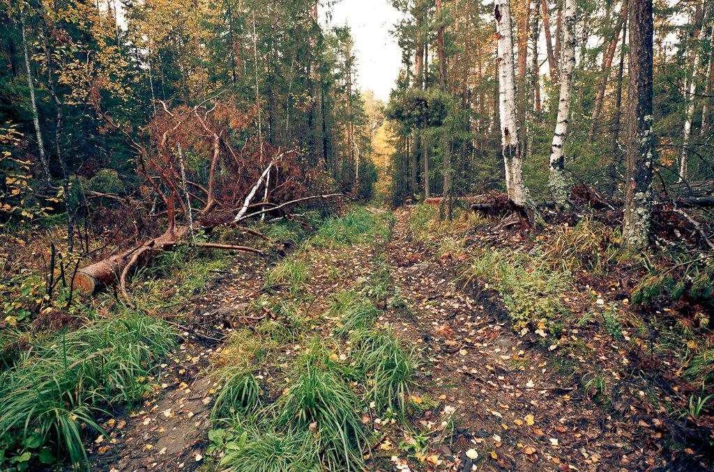 Осенний лес, снятый на Nikon D5100 + Samyang 14 mm/2.8