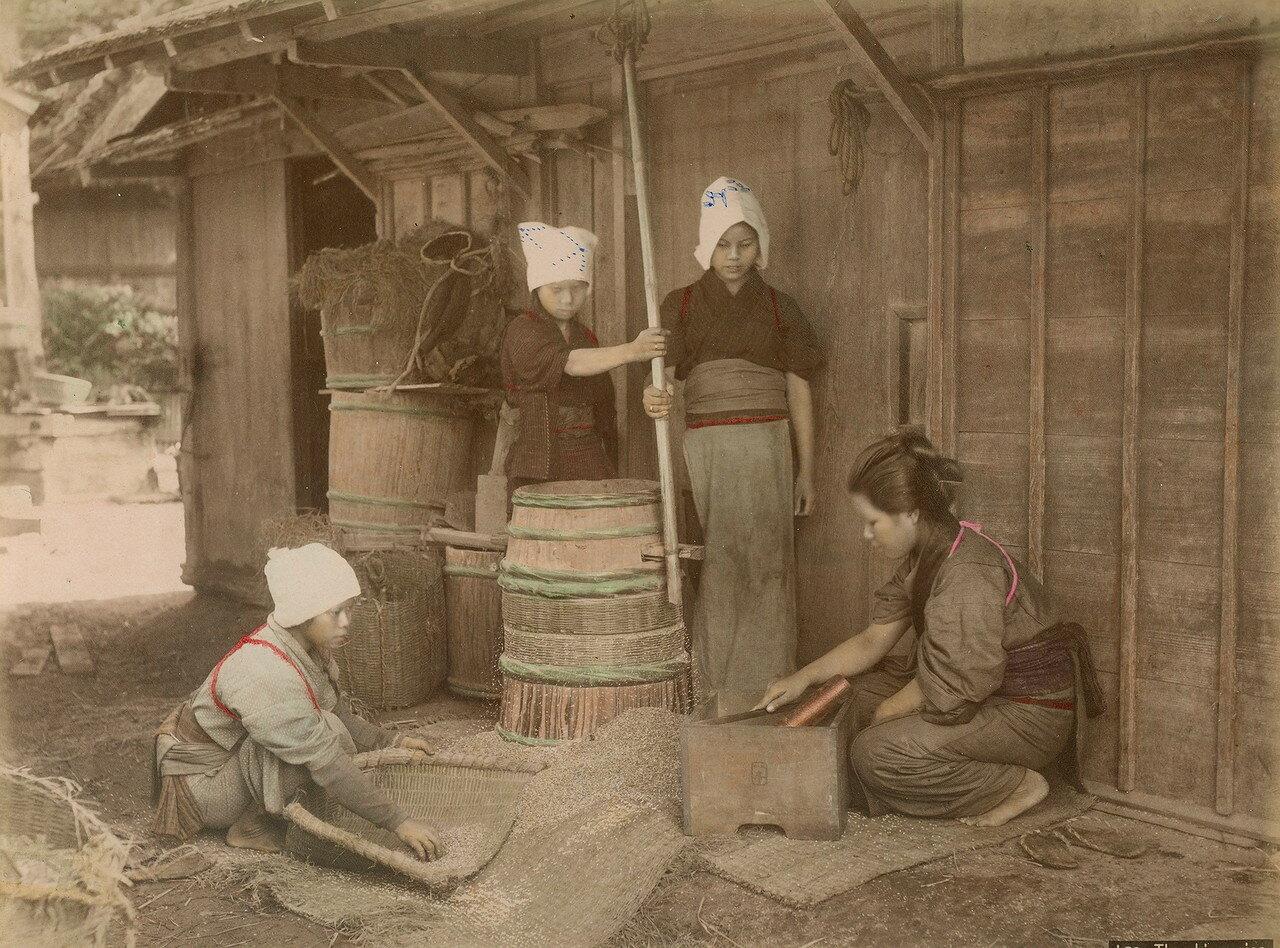 Обмолот риса