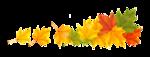 листья   клёна - осень.png
