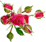 RR_MemoriesOfMom_RoseGarden_Element (48).png
