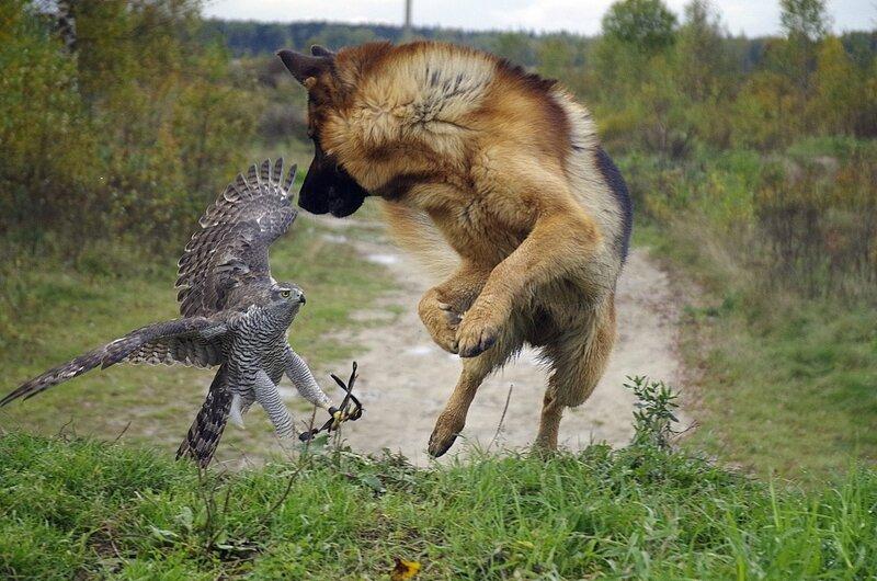 Напарники на охоте!!! Не переживайте, они дружат, и никто над ними не издевается!