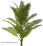 palm_by_twins72_stocks-d4ts4id.png