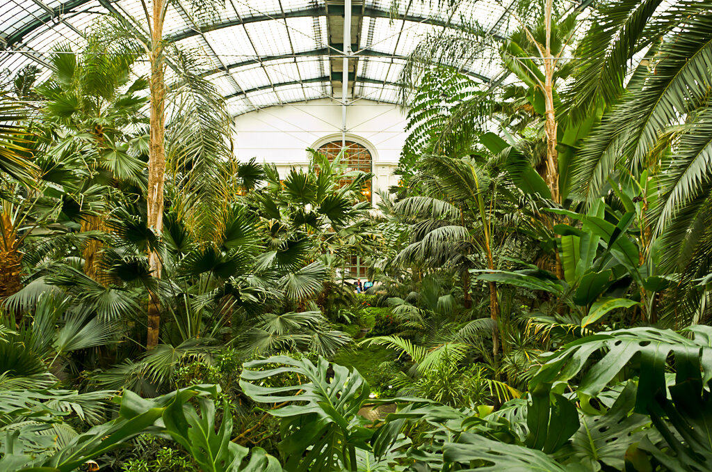 Джунгли в ботаническом парке Palmengarten во Франкфурте